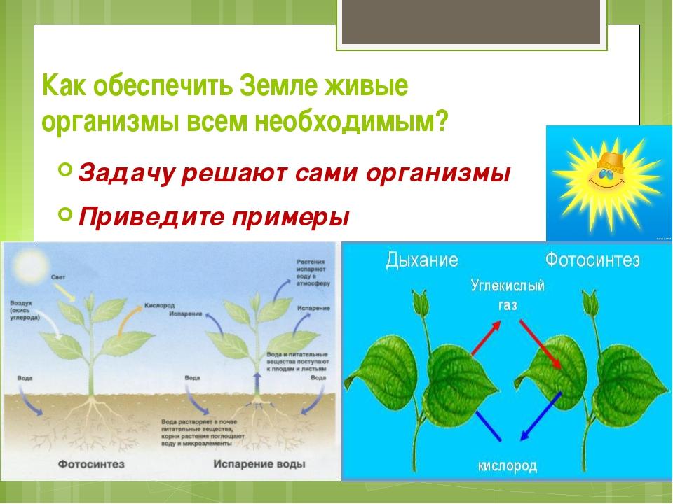 Как обеспечить Земле живые организмы всем необходимым? Задачу решают сами орг...