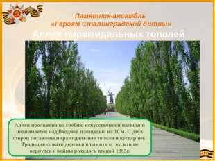 Памятник-ансамбль «Героям Сталинградской битвы» Аллея пирамидальных тополей А