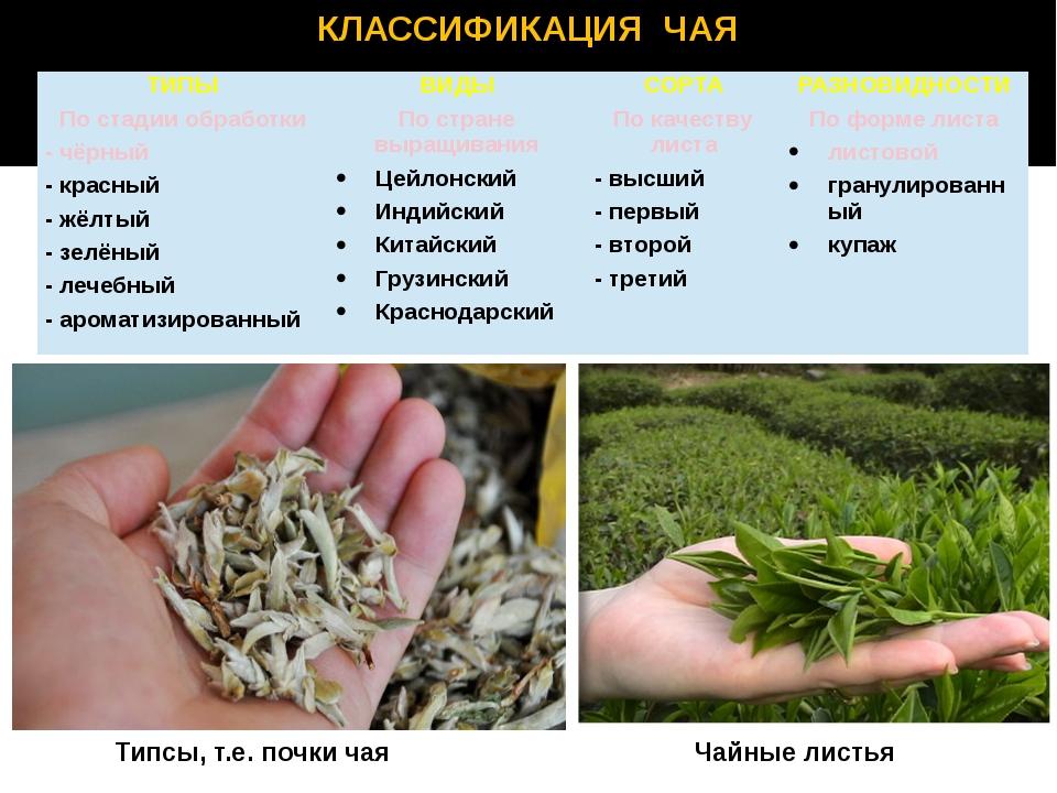 Вид и ассортимент чая