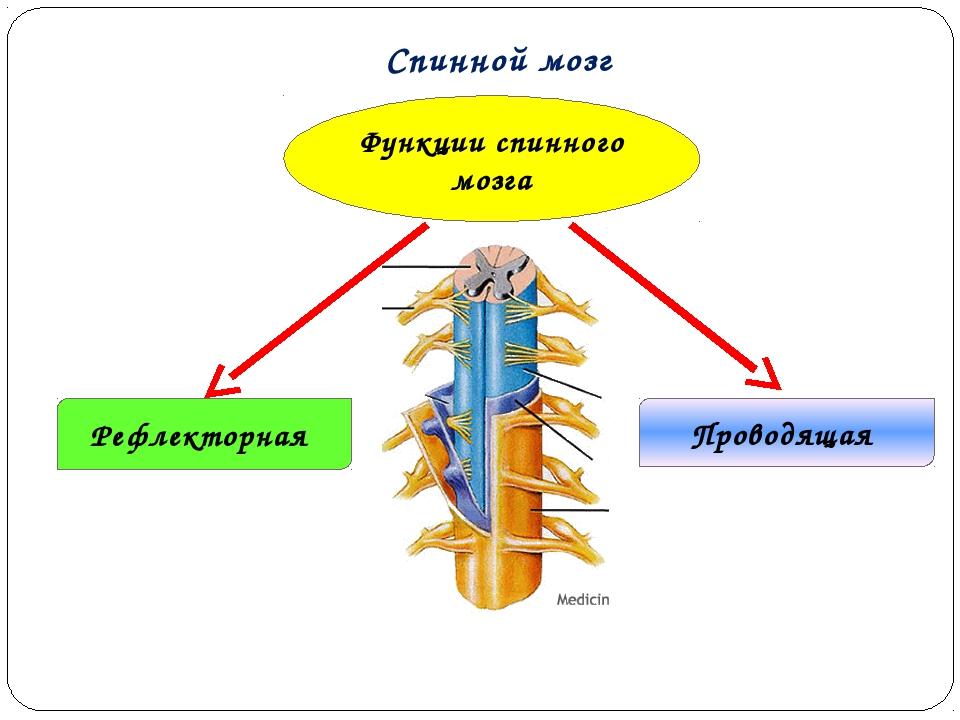 кожа термобелье российская разработка спинной мозг того, что далеко