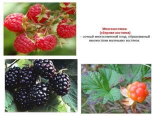Многокостянка (сборная костянка) – сочный многосемянной плод, образованный мн
