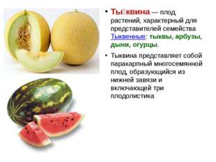 Ты́квина — плод растений, характерный для представителей семейства Тыквенные: