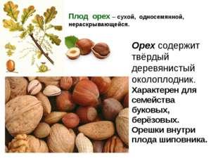 Плод орех – сухой, односемянной, нераскрывающейся. Орех содержит твёрдый дере