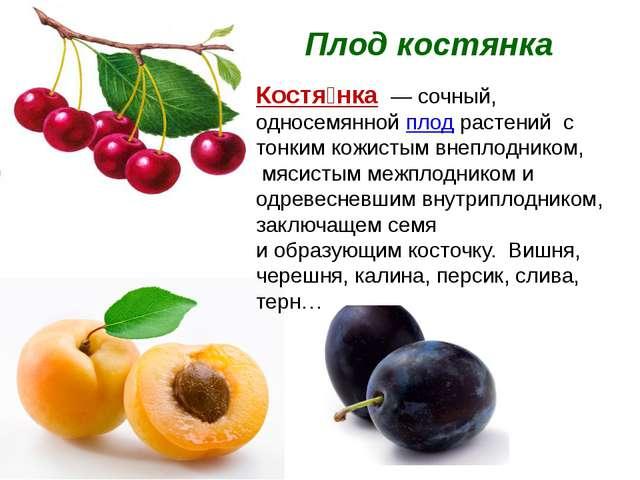 Плод костянка Костя́нка — сочный, односемянной плод растений с тонким кожисты...