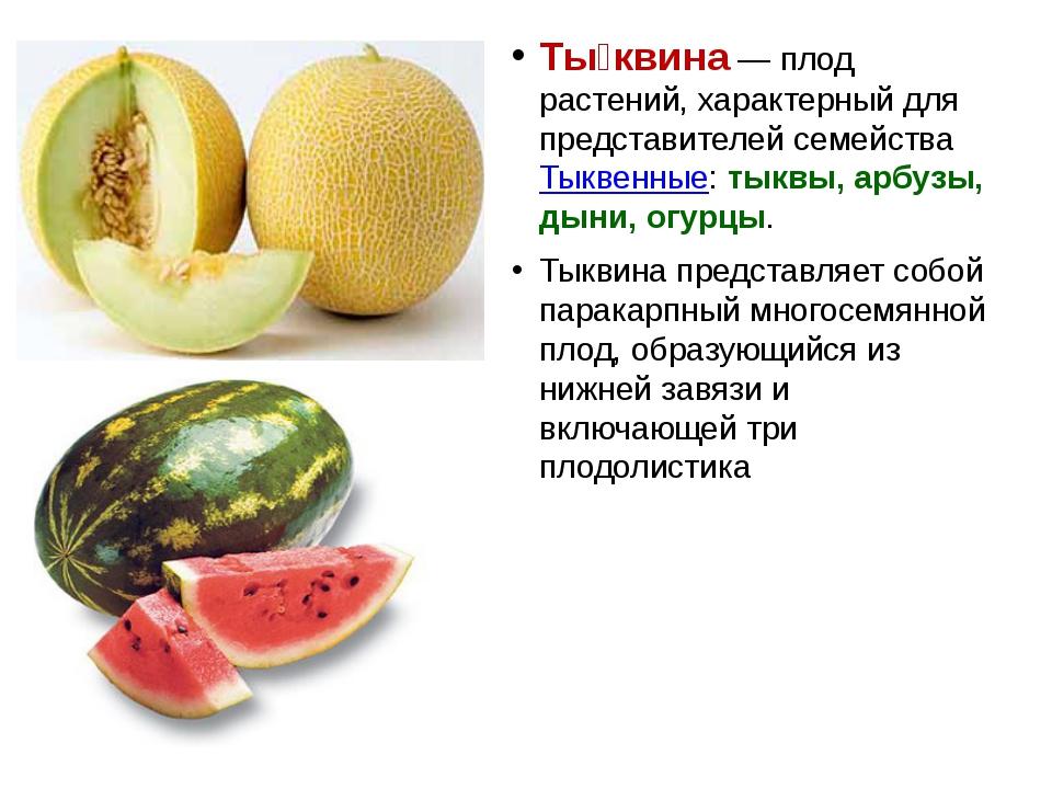 Ты́квина — плод растений, характерный для представителей семейства Тыквенные:...