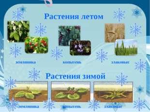Растения летом земляника копытень злаковые Растения зимой земляника копытень