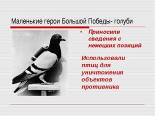 Маленькие герои Большой Победы- голуби Приносили сведения с немецких позиций