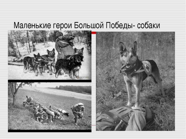 Маленькие герои Большой Победы- собаки