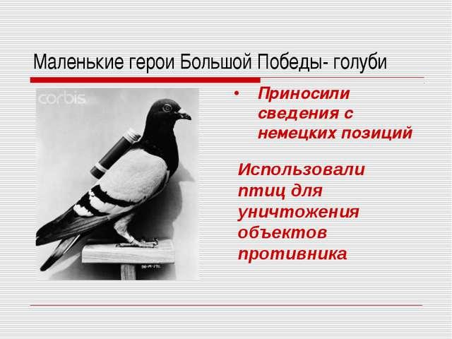 Маленькие герои Большой Победы- голуби Приносили сведения с немецких позиций...