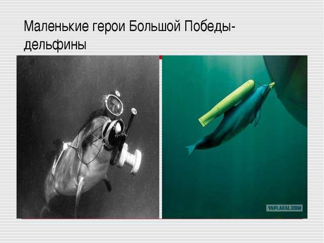 Маленькие герои Большой Победы- дельфины