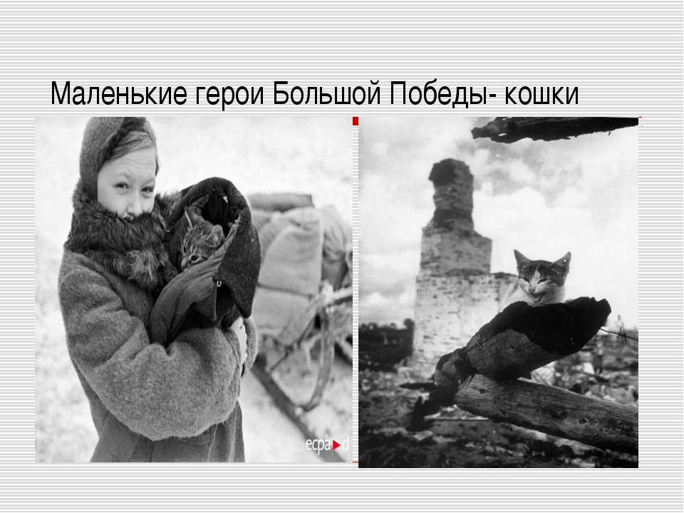 Маленькие герои Большой Победы- кошки