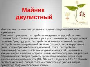 Майник двулистный Многолетнее травянистое растение с тонким ползучим ветвисты