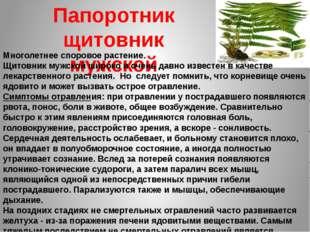 Папоротник щитовник мужской Многолетнее споровое растение. Щитовник мужской ш