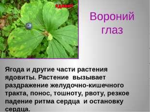 Вороний глаз Ягода и другие части растения ядовиты. Растение вызывает раздраж