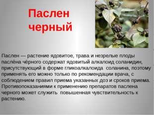 Паслен черный Паслен— растение ядовитое, трава и незрелые плоды паслёна чёрн