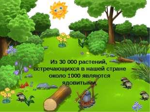 Из 30 000 растений, встречающихся в нашей стране около 1000 являются ядовитыми.