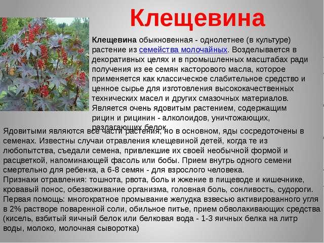 Ядовитыми являются все части растения, но в основном, яды сосредоточены в сем...