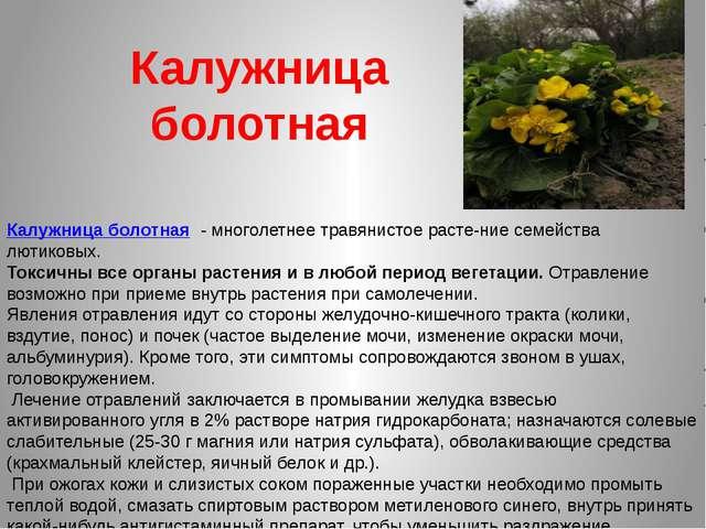 Калужница болотная Калужница болотная - многолетнее травянистое растение се...