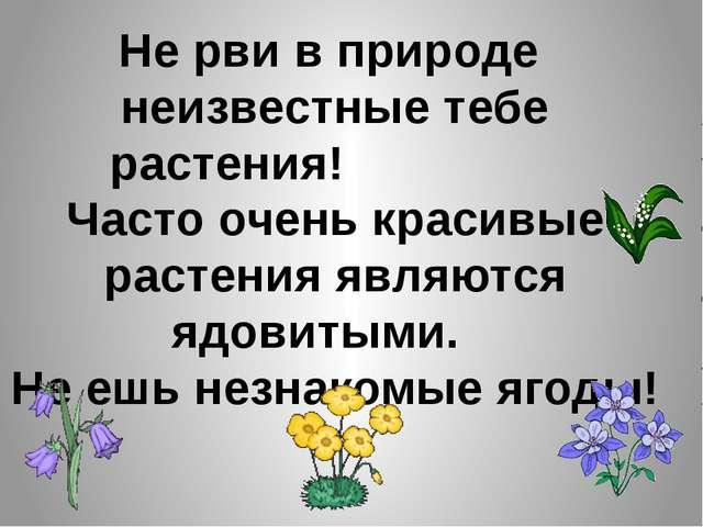 Не рви в природе неизвестные тебе растения! Часто очень красивые растения явл...