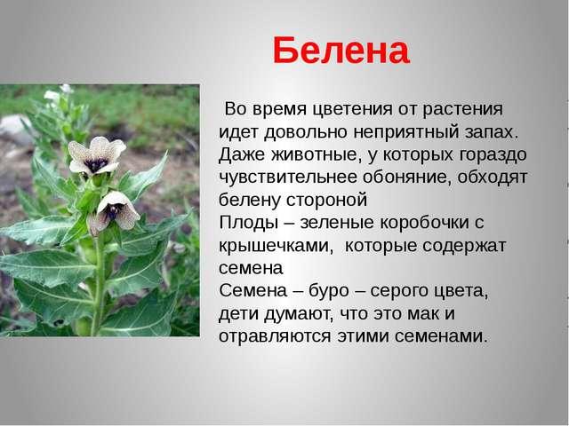 Во время цветения от растения идет довольно неприятный запах. Даже животные,...