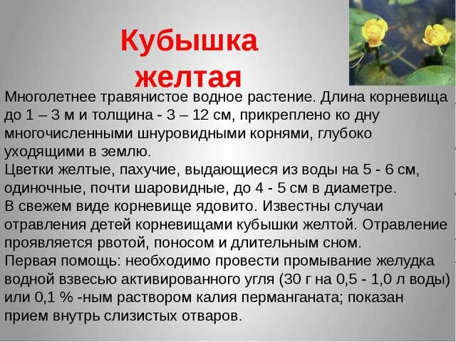Кубышка желтая Многолетнее травянистое водное растение. Длина корневища до 1...
