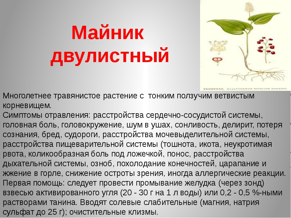 Майник двулистный Многолетнее травянистое растение с тонким ползучим ветвисты...