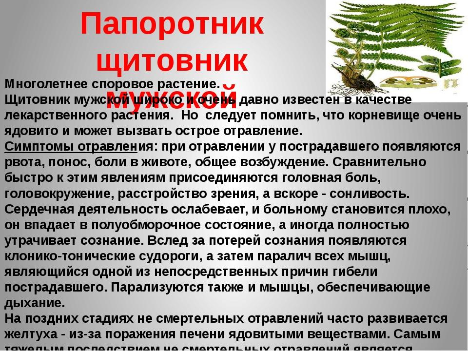 Папоротник щитовник мужской Многолетнее споровое растение. Щитовник мужской ш...