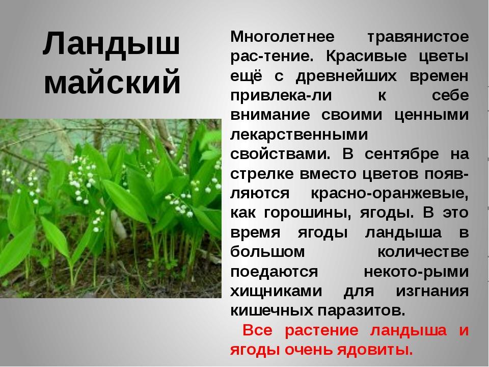 Многолетнее травянистое рас-тение. Красивые цветы ещё с древнейших времен при...