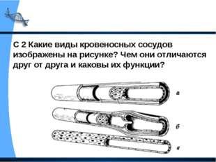 С 2 Какие виды кровеносных сосудов изображены на рисунке? Чем они отличаются