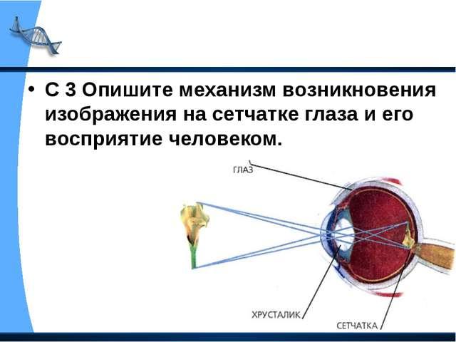 С 3 Опишите механизм возникновения изображения на сетчатке глаза и его воспри...