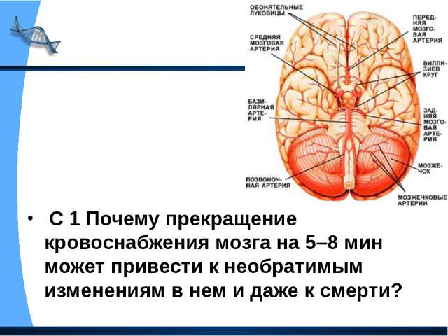С 1 Почему прекращение кровоснабжения мозга на 5–8 мин может привести к необ...
