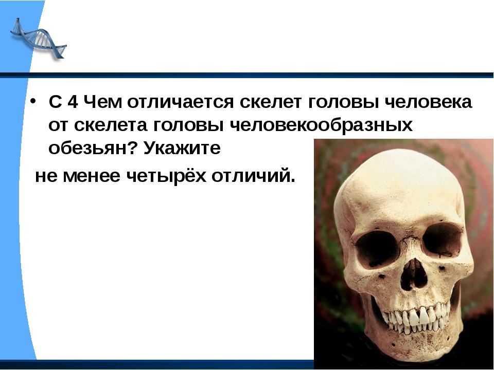 С 4 Чем отличается скелет головы человека от скелета головы человекообразных...