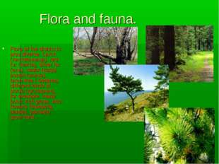 Flora and fauna. Flora of the district is also diverse. Larch (лиственница),
