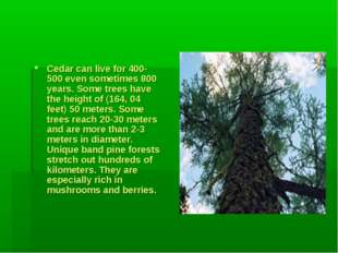 Cedar can live for 400-500 even sometimes 800 years. Some trees have the hei
