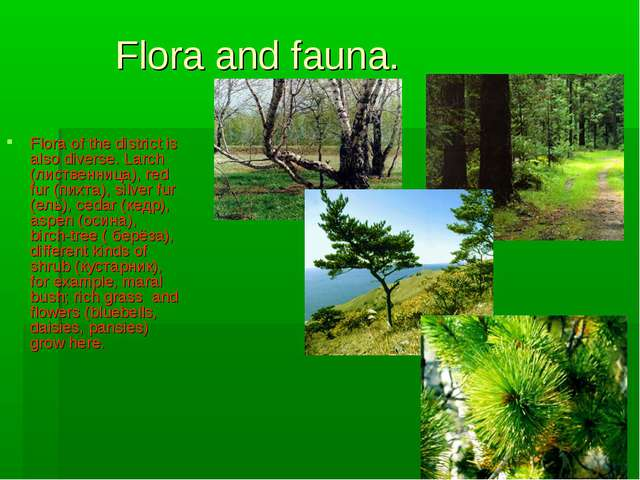 Flora and fauna. Flora of the district is also diverse. Larch (лиственница),...