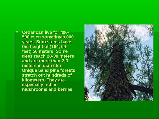 Cedar can live for 400-500 even sometimes 800 years. Some trees have the hei...