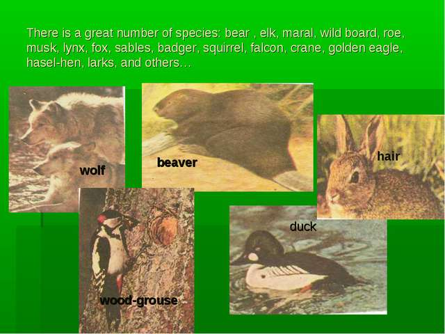 There is a great number of species: bear , elk, maral, wild board, roe, musk,...