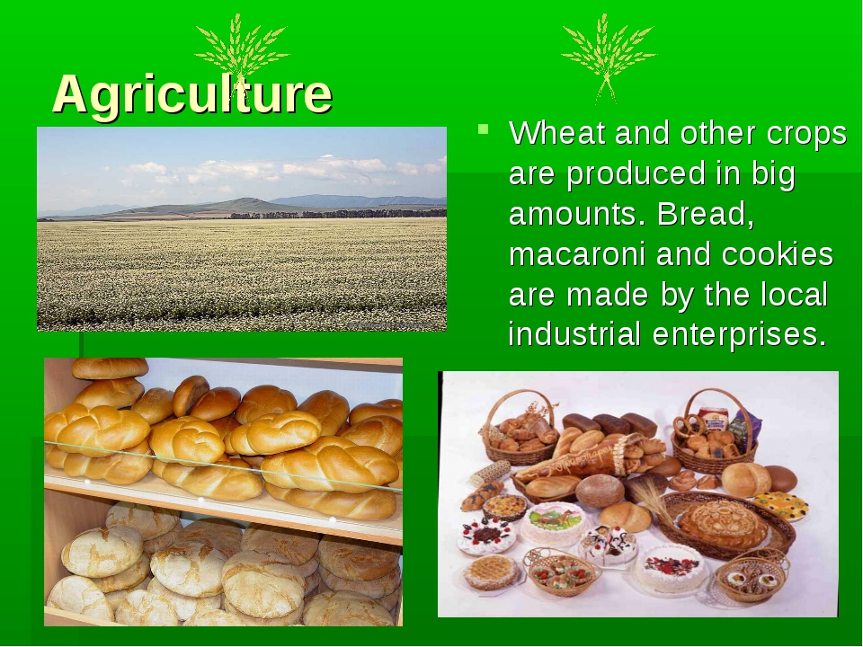 Agriculture Wheat and other crops are produced in big amounts. Bread, macaron...