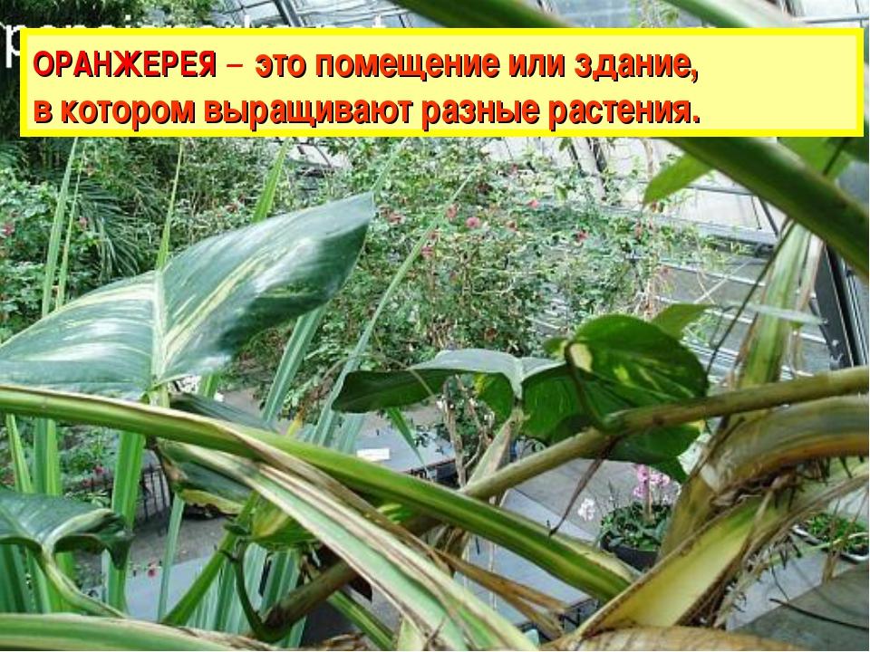 ОРАНЖЕРЕЯ – это помещение или здание, в котором выращивают разные растения.