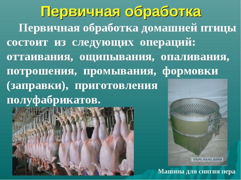 Первичная обработка Первичная обработка домашней птицы состоит из следующих о...