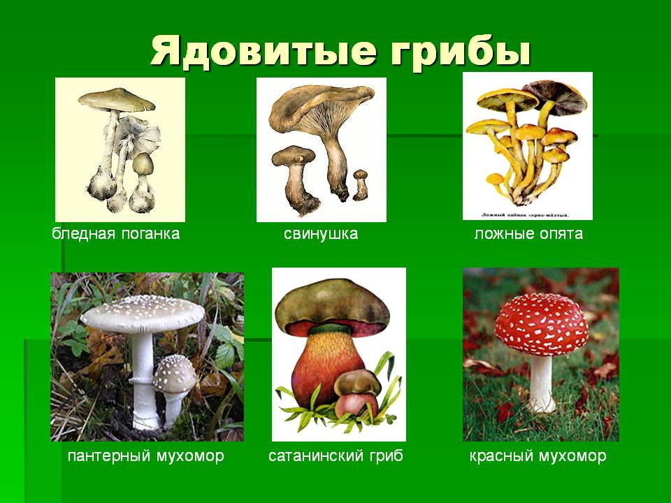 http://gorzdrav.odessa.ua/images/0006-006-JAdovitye-griby.jpg