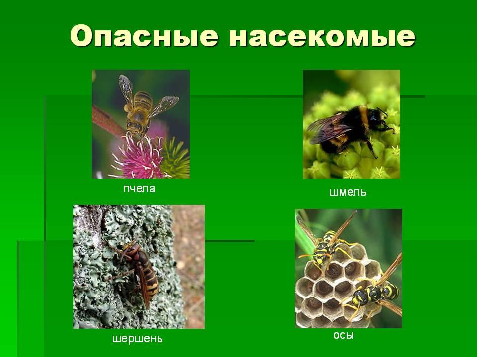 http://5klass.net/datas/okruzhajuschij-mir/Lesnye-opasnosti-2-klass/0007-007-Opasnye-nasekomye.jpg