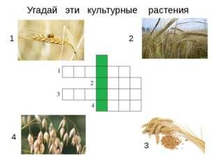 Угадай эти культурные растения 1 2 3 4