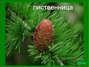 Первая публичная акция по посадке именных деревьев состоялась в Архангельске