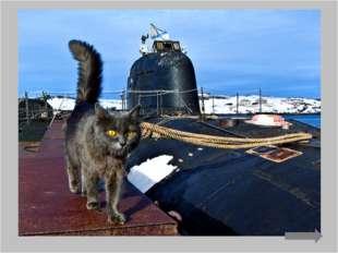 А в годы Второй мировой их брали на борт субмарин в качестве живых детекторов
