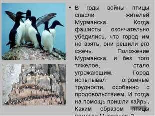 В годы войны птицы спасли жителей Мурманска. Когда фашисты окончательно убеди