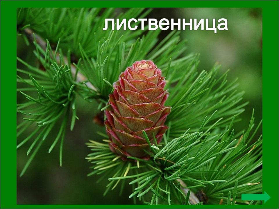 Первая публичная акция по посадке именных деревьев состоялась в Архангельске...