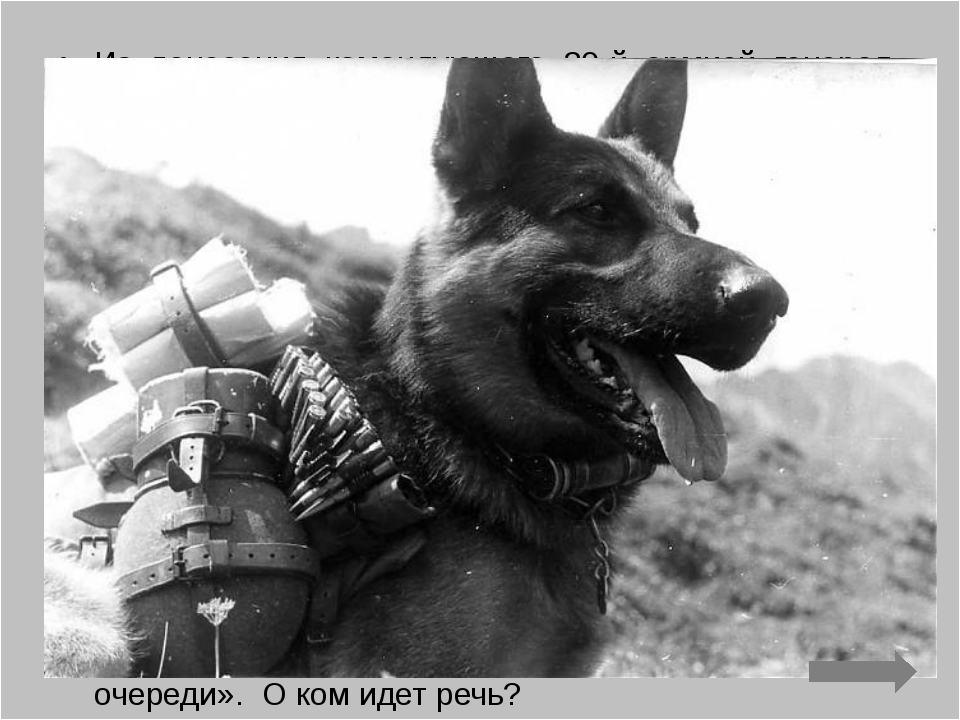 Из донесения командующего 30-й армией генерал-лейтенанта Лелюшенко от 14 март...