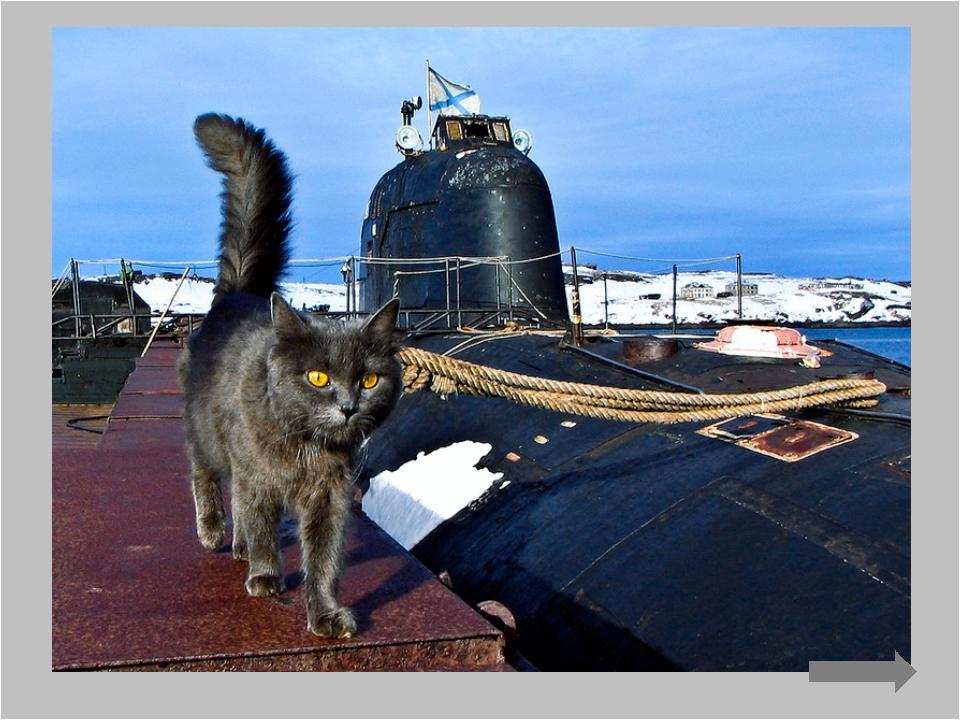 А в годы Второй мировой их брали на борт субмарин в качестве живых детекторов...