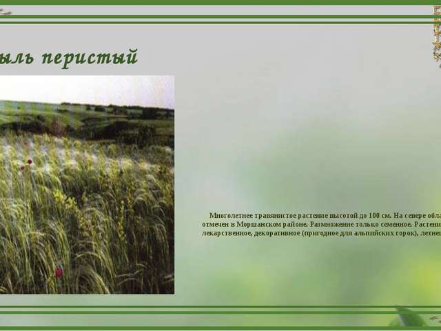 Ковыль перистый Многолетнее травянистое растение высотой до 100 см. На севере...